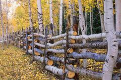 Aspen Fence