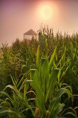 Corn Crib