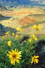 High Desert Bloom