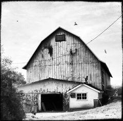 Murphy's Barn