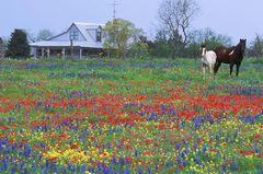 Texas Homestead