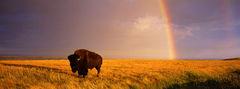 Vision On The Prairie