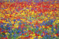Carpet Of Wildflowers