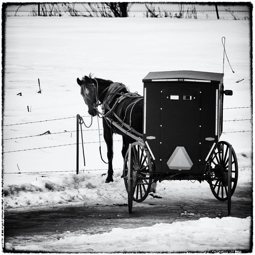 Amish, Horse, Buggy, Horse and Buggy
