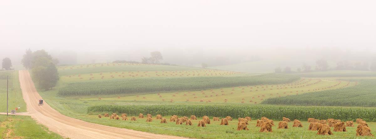Amish, Buggy, Hay, field