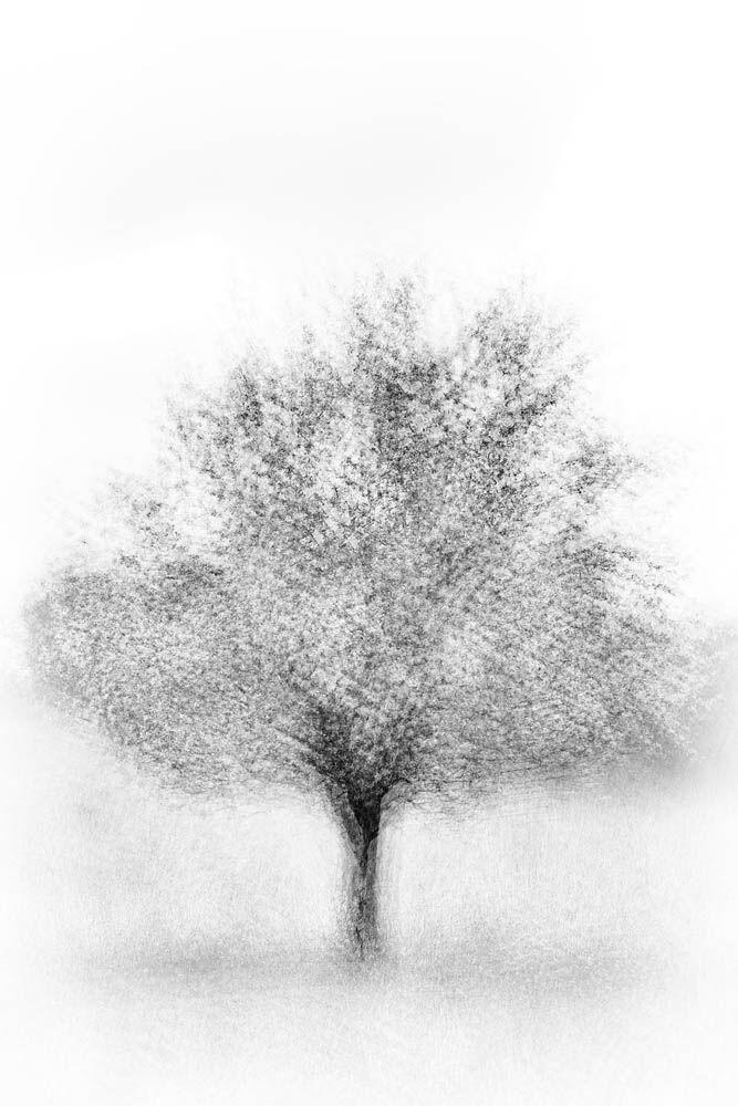 Tree, Tree Abstract