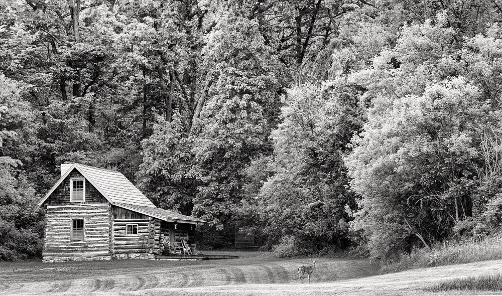 cabin, deer, photo