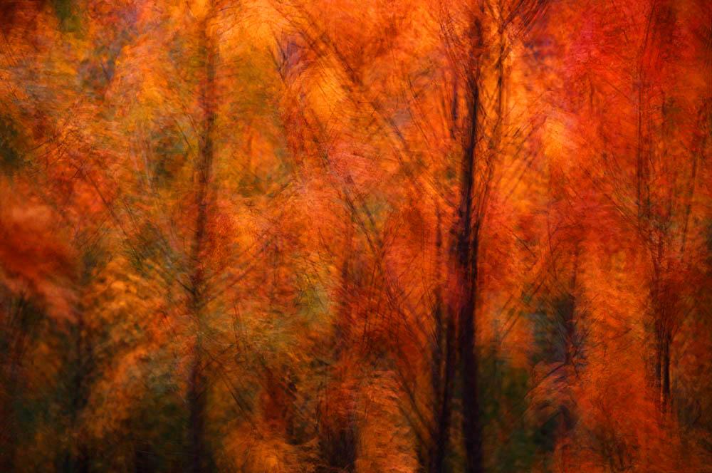 Color, Fall, Maple, Minnesota