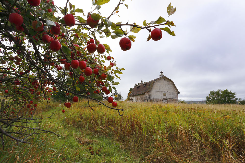 Apple Tree, Barn