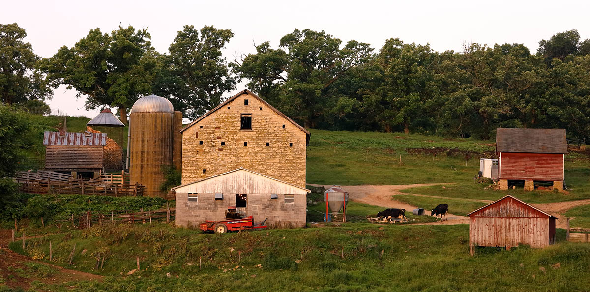 Cows, Barn