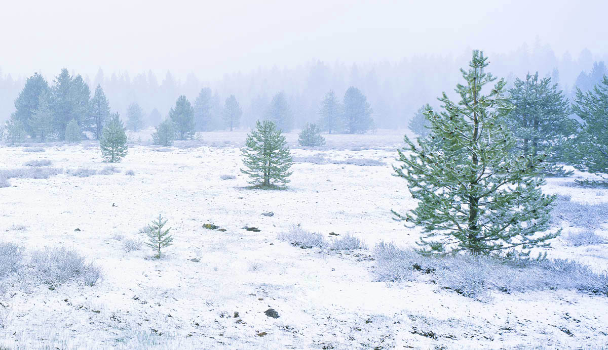 snow, tree, winter