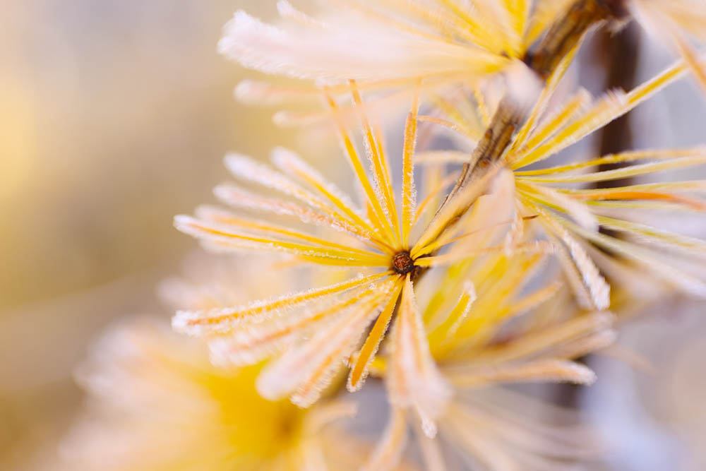 Tree, tree needles
