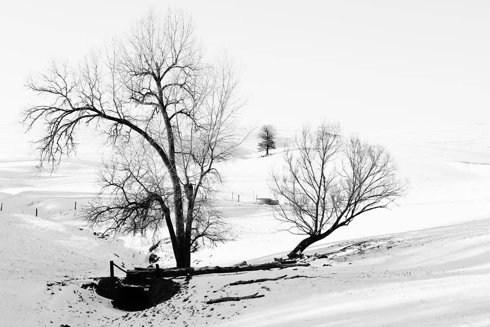 Trees, Winter, Tree Abstract,