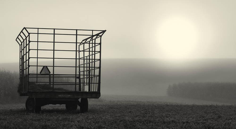 farm, sun, fog