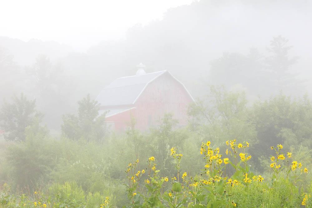 Barn, fog, Barn and flowers, barn fog flowers