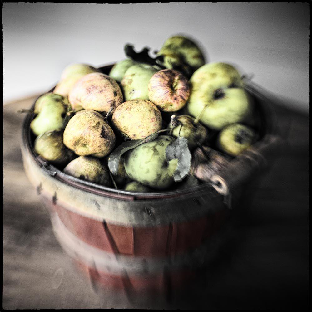Apples, Apple Tree, Fruit