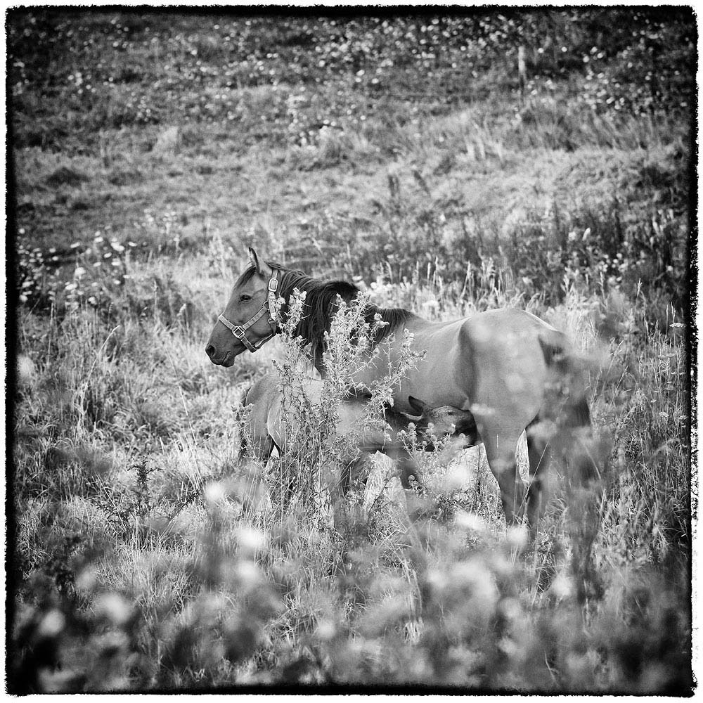 Horse and Foal, Horse