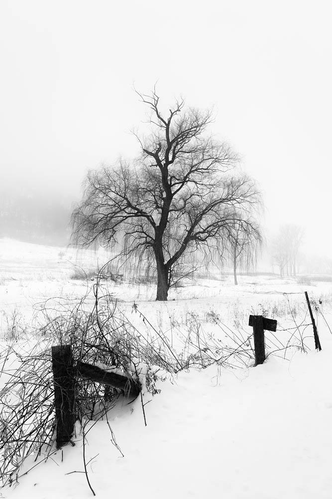 Tree, Winter Tree