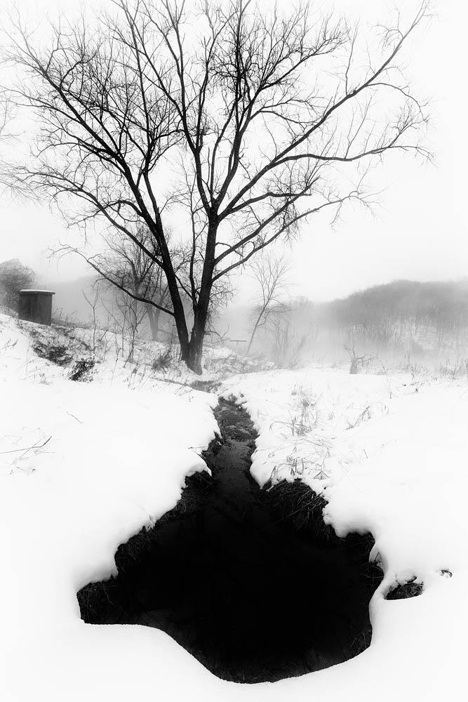 Winter, Snow, tree, Spring in Winter